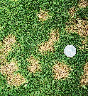 Lawn Disease Control All Green
