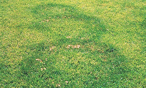 Lawn Disease Control All Green Lawn And Tree